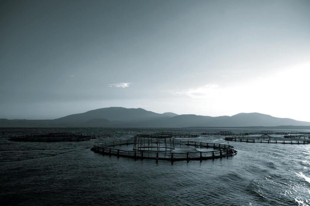 Balık Çı̇ftlı̇kleri Sürdürülebilir Beslenmeye Katkı Sağlıyor